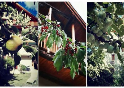 Clot Saint Joseph fruits du jardin