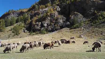 Parc National des Ecrins paturage troupeau